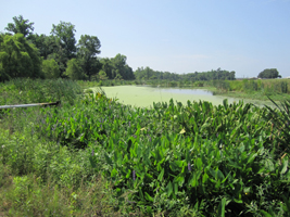 Pathogens and Wetlands