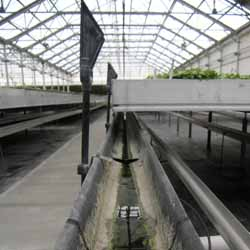 Troughs collect irrigation runoff for reuse